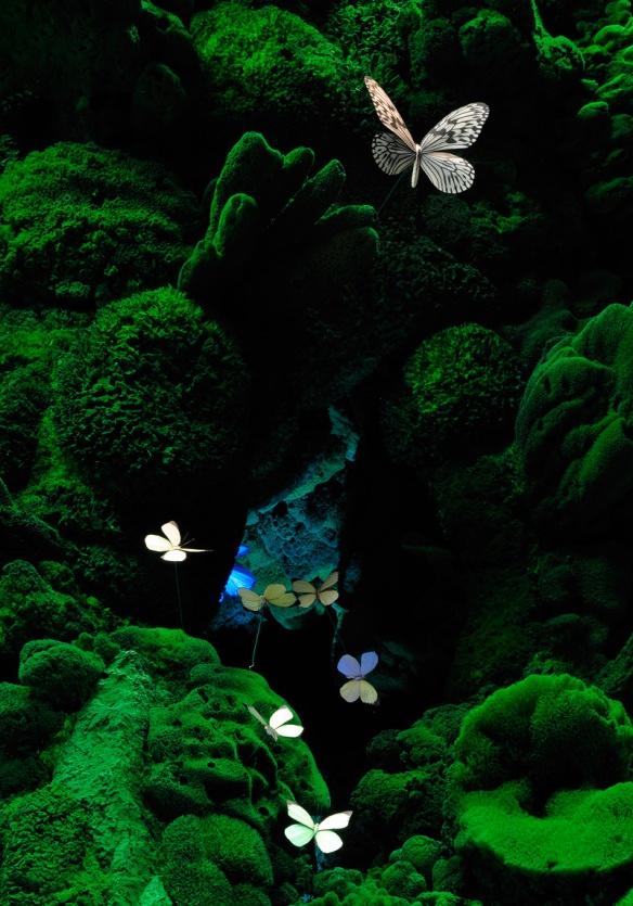 biotope-butterflies